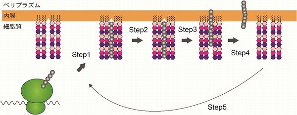 菌 膜 リリース 筋膜リリースに効果的! フォームローラーの選び方とおすすめ12選