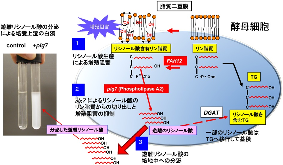 化学と生物 - 日本農芸化学会 - ...