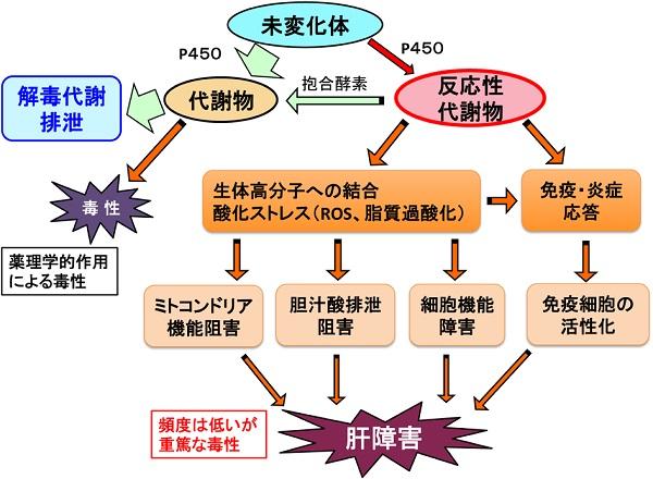 製薬企業での薬物動態研究 - pharm.or.jp